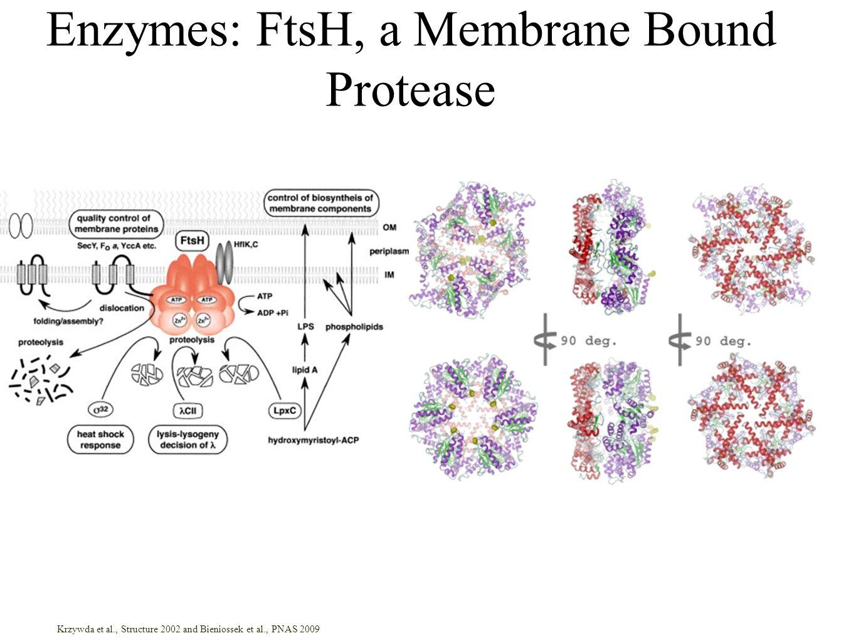 Enzymes: FtsH, a Membrane Bound Protease Krzywda et al., Structure 2002 and Bieniossek et al., PNAS 2009