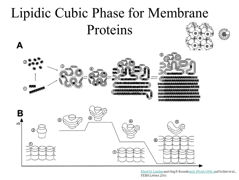 Lipidic Cubic Phase for Membrane Proteins Ehud M. LandauEhud M.