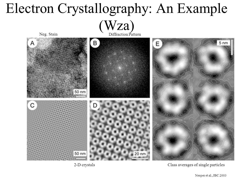 Electron Crystallography: An Example (Wza) Nesper et al.,JBC 2003 Neg.