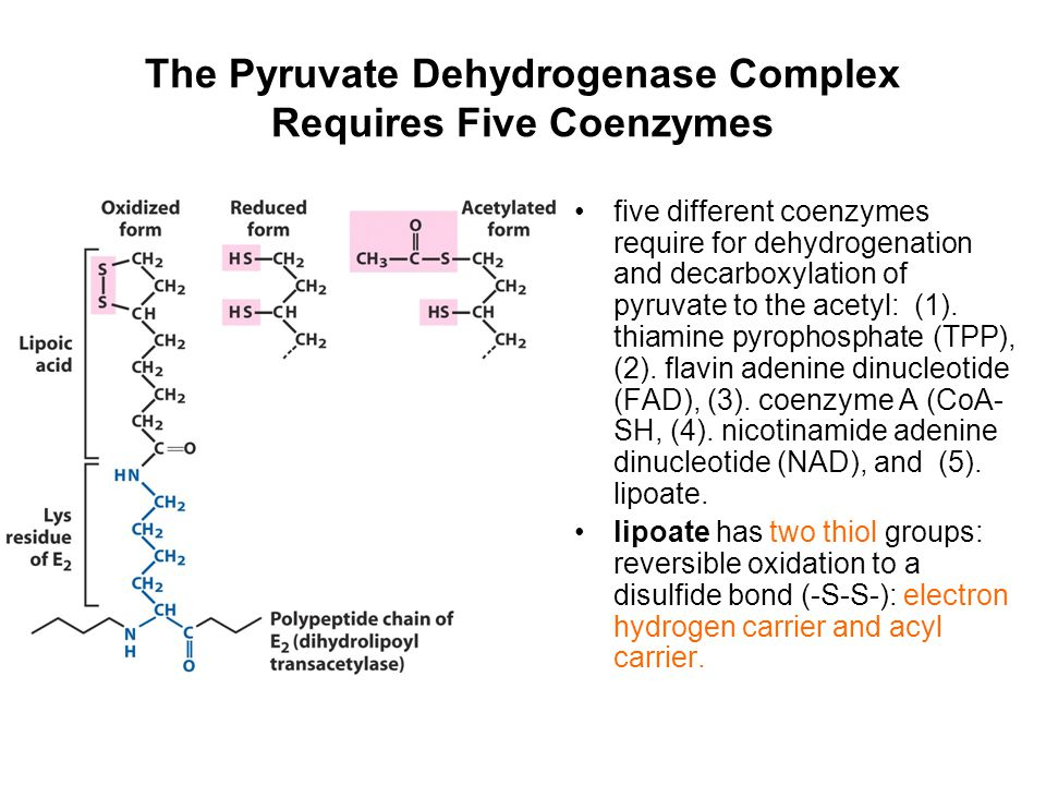 The Pyruvate Dehydrogenase Complex Requires Five Coenzymes five different coenzymes require for dehydrogenation and decarboxylation of pyruvate to the
