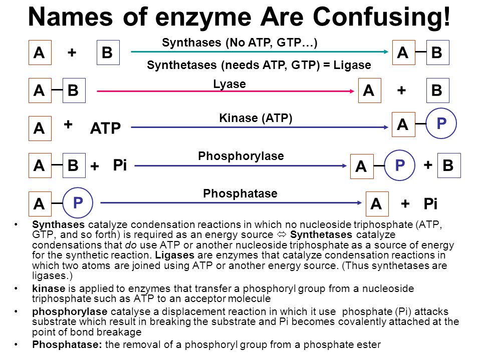 Names of enzyme Are Confusing! Synthases catalyze condensation reactions in which no nucleoside triphosphate (ATP, GTP, and so forth) is required as a