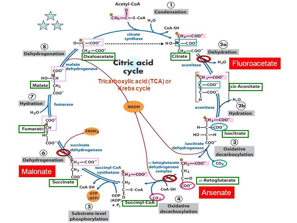 Tricarboxylic acid (TCA) or Krebs cycle Fluoroacetate Arsenate Malonate
