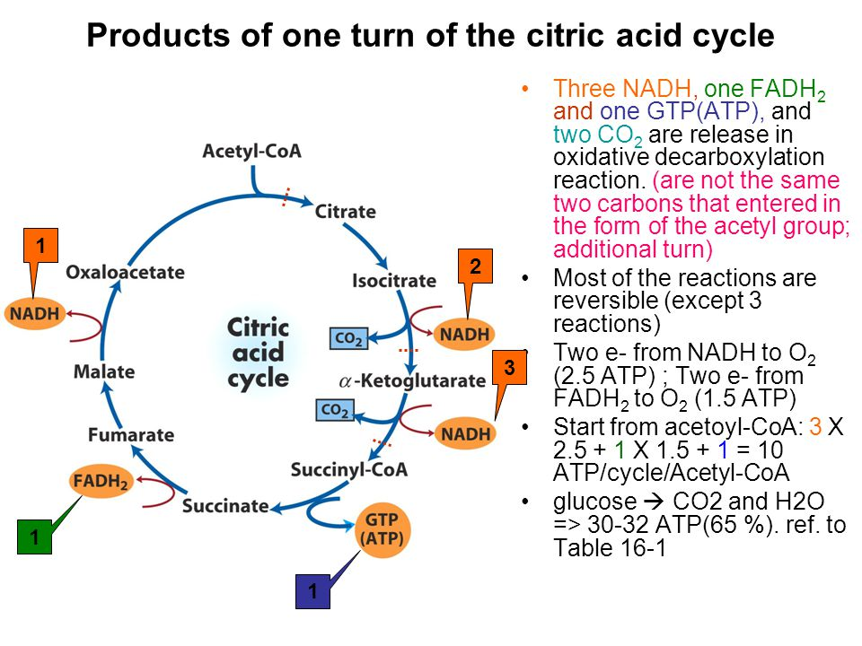 Products of one turn of the citric acid cycle Three NADH, one FADH 2 and one GTP(ATP), and two CO 2 are release in oxidative decarboxylation reaction.