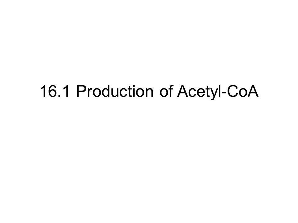 16.1 Production of Acetyl-CoA