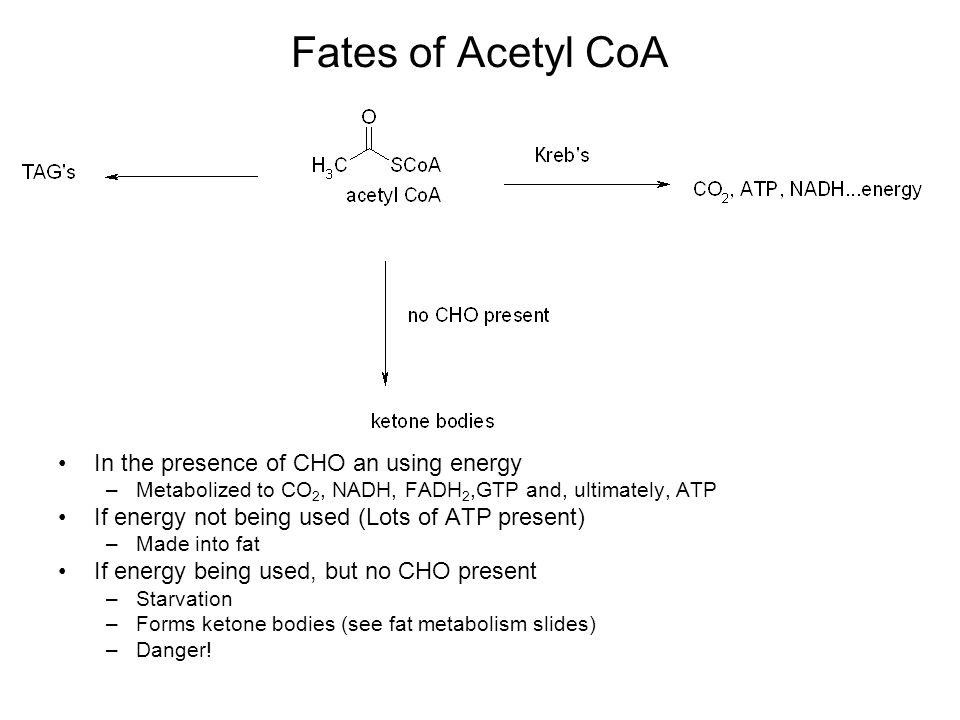 Fates of Acetyl CoA In the presence of CHO an using energy –Metabolized to CO 2, NADH, FADH 2,GTP and, ultimately, ATP If energy not being used (Lots