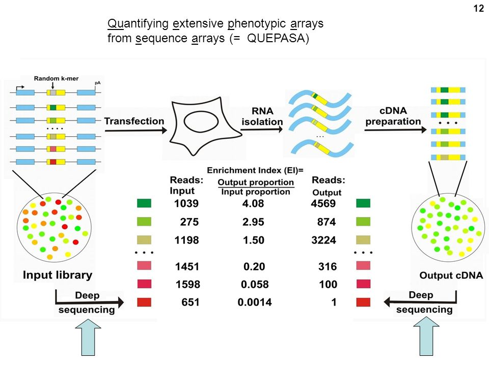 12 Quantifying extensive phenotypic arrays from sequence arrays (= QUEPASA)