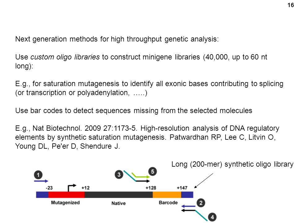 16 Next generation methods for high throughput genetic analysis: Use custom oligo libraries to construct minigene libraries (40,000, up to 60 nt long): E.g., for saturation mutagenesis to identify all exonic bases contributing to splicing (or transcription or polyadenylation, …..) Use bar codes to detect sequences missing from the selected molecules E.g., Nat Biotechnol.