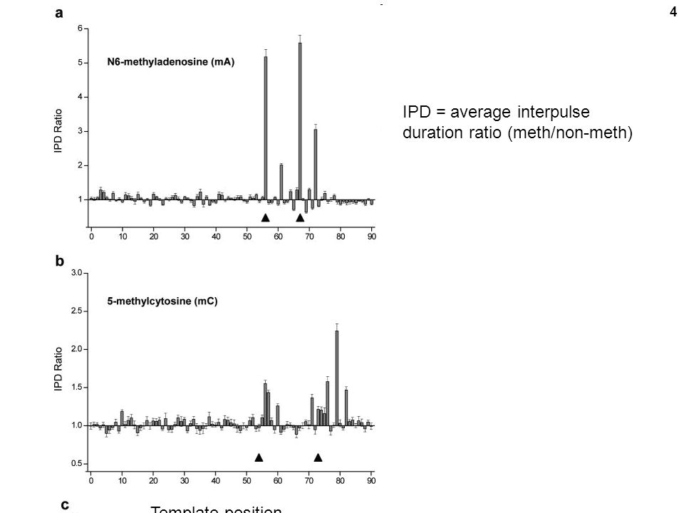 4 IPD = average interpulse duration ratio (meth/non-meth) Template position