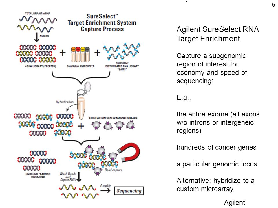 6 Agilent SureSelect RNA Target Enrichment Capture a subgenomic region of interest for economy and speed of sequencing: E.g., the entire exome (all exons w/o introns or intergeneic regions) hundreds of cancer genes a particular genomic locus Alternative: hybridize to a custom microarray.