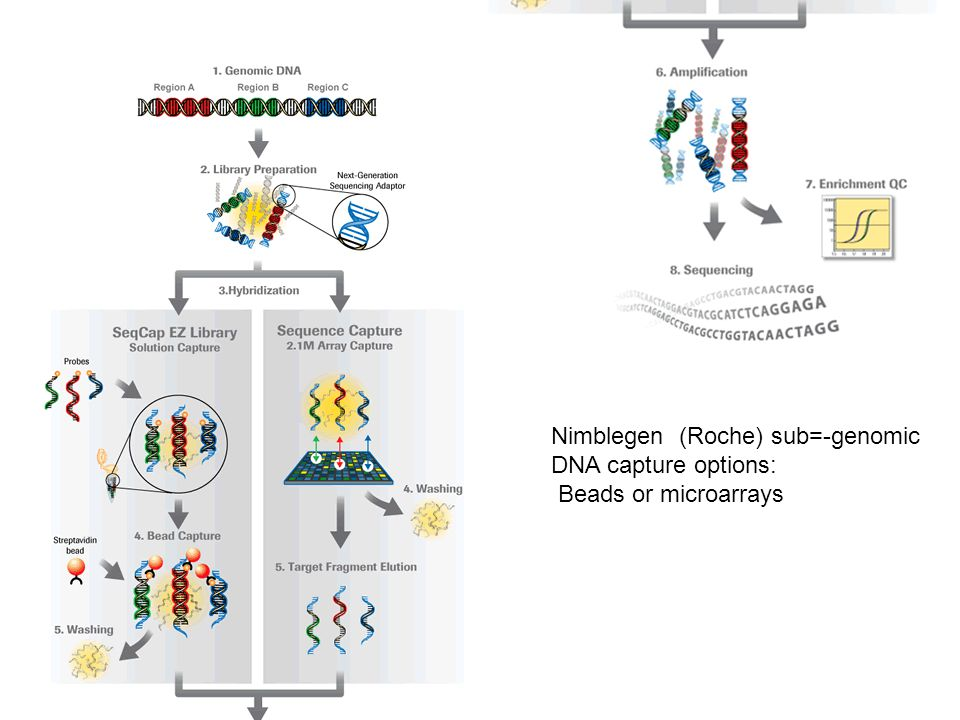 8 Targeted Capture and Next- Generation Sequencing Identifies C9orf75, encoding Taperin, as the Mutated Gene in Nonsyndromic Deafness DFNB79 Rehman et al.
