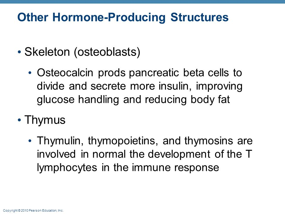 Copyright © 2010 Pearson Education, Inc. Other Hormone-Producing Structures Skeleton (osteoblasts) Osteocalcin prods pancreatic beta cells to divide a