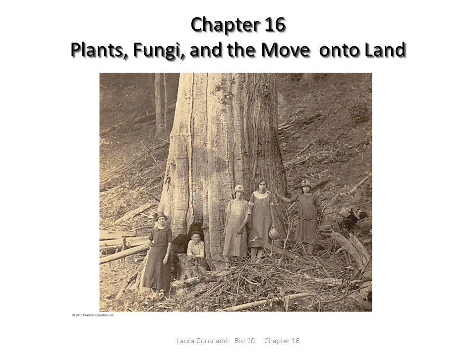 Figure 16.8 Laura Coronado Bio 10 Chapter 16