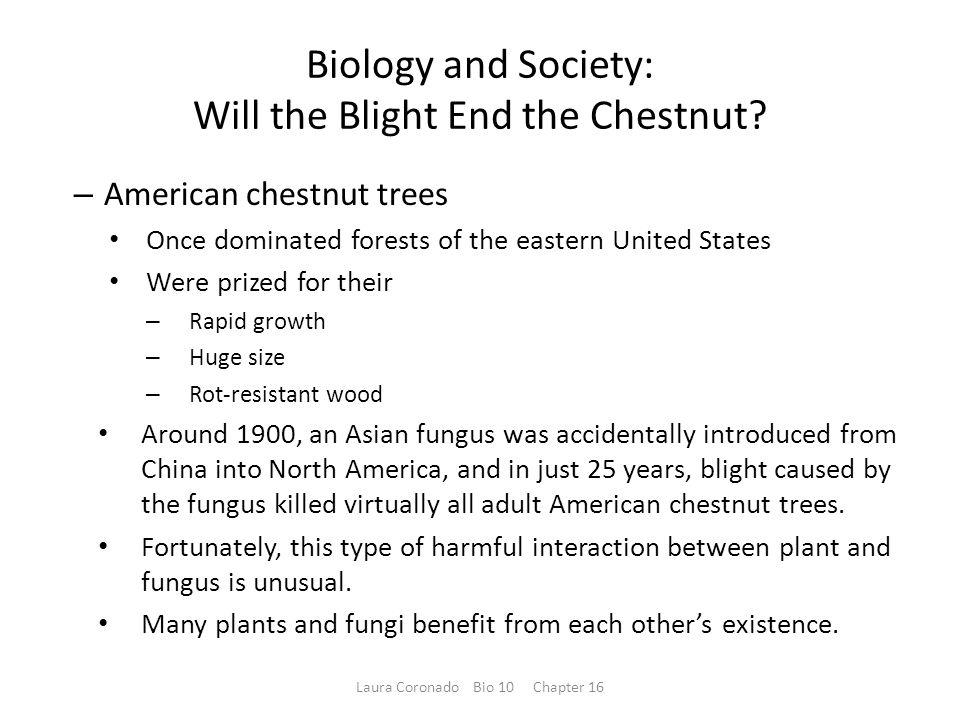Characteristics of Fungi – Fungi have unique Structures Forms of nutrition is chemoheterotrophs Acquire their nutrients by absorption – A fungus Digests food outside its body Secretes powerful digestive enzymes to break down the food Absorbs the simpler food compounds Laura Coronado Bio 10 Chapter 16