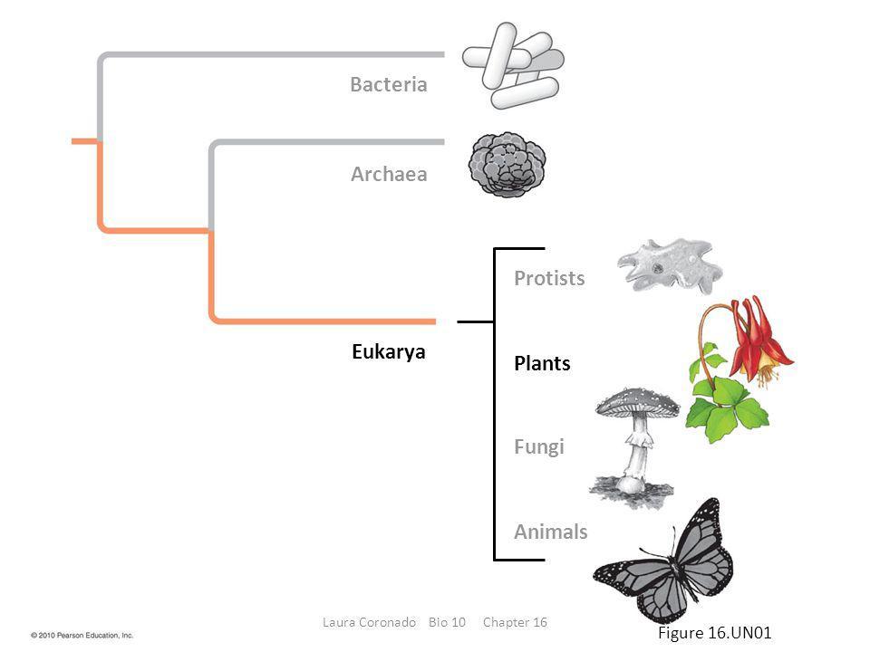 Truffles (the fungal kind, not the chocolates) Blue cheese Chanterelle mushrooms Figure 16.26 Laura Coronado Bio 10 Chapter 16