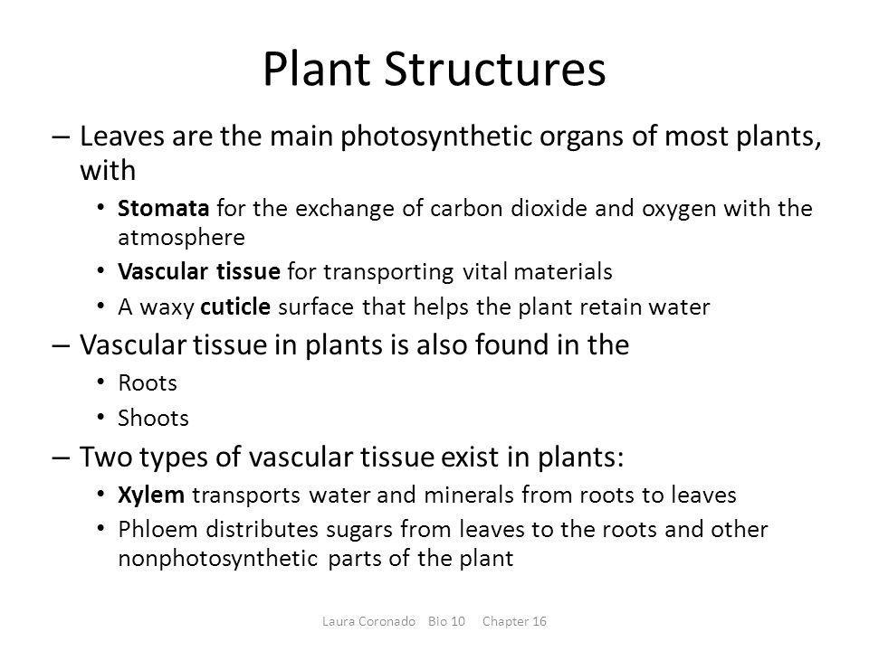 Leaves Gametangia Stomata Cuticle Lignin Shoot Vascular tissues Roots Figure 16.UN07 Laura Coronado Bio 10 Chapter 16
