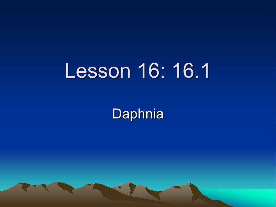 Lesson 16: 16.1 Daphnia