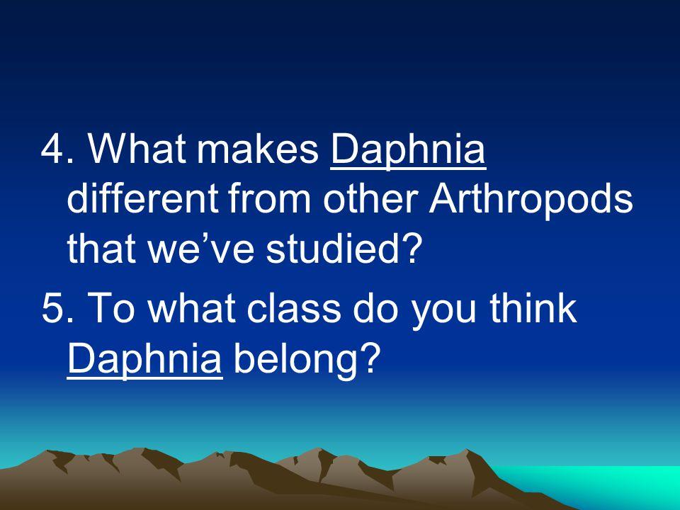VOCABULARY: Daphnia Arthropod Exoskeleton Appendages Crustacean Gills