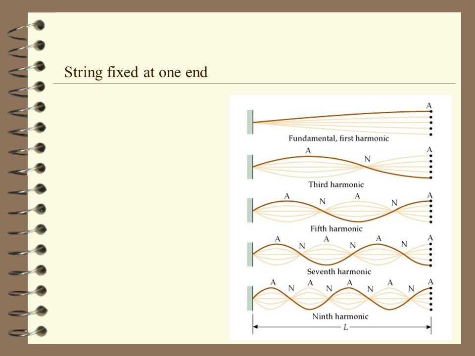 String fixed at one end