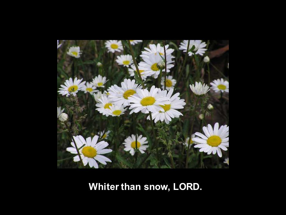Whiter than snow, LORD.
