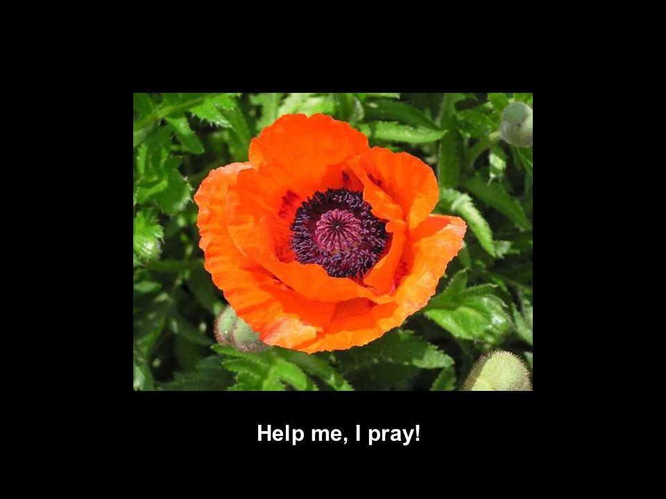 Help me, I pray!