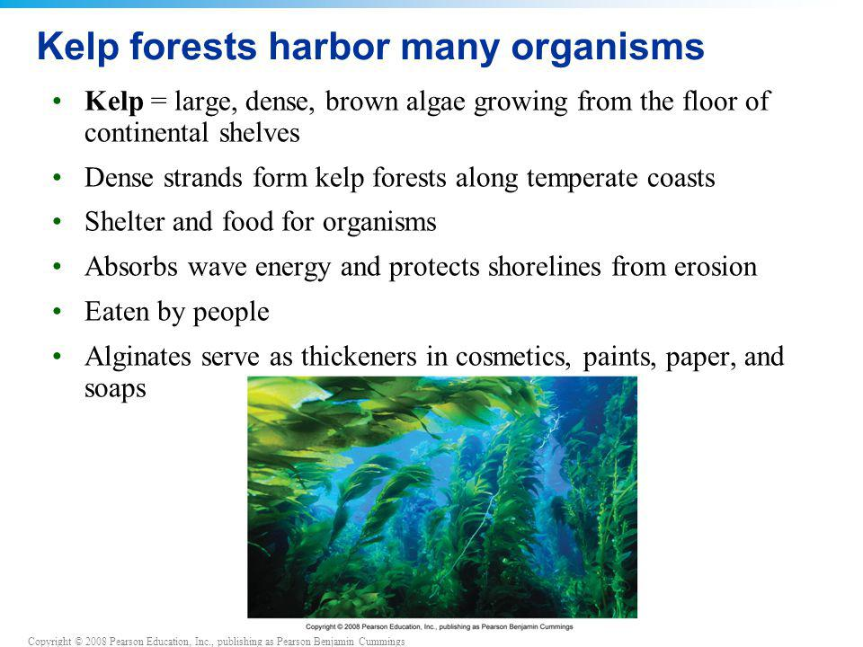 Copyright © 2008 Pearson Education, Inc., publishing as Pearson Benjamin Cummings Kelp forests harbor many organisms Kelp = large, dense, brown algae growing from the floor of continental shelves Dense strands form kelp forests along temperate coasts Shelter and food for organisms Absorbs wave energy and protects shorelines from erosion Eaten by people Alginates serve as thickeners in cosmetics, paints, paper, and soaps