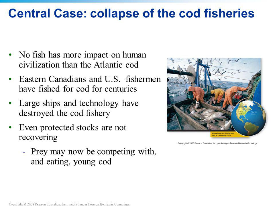 Copyright © 2008 Pearson Education, Inc., publishing as Pearson Benjamin Cummings Central Case: collapse of the cod fisheries No fish has more impact