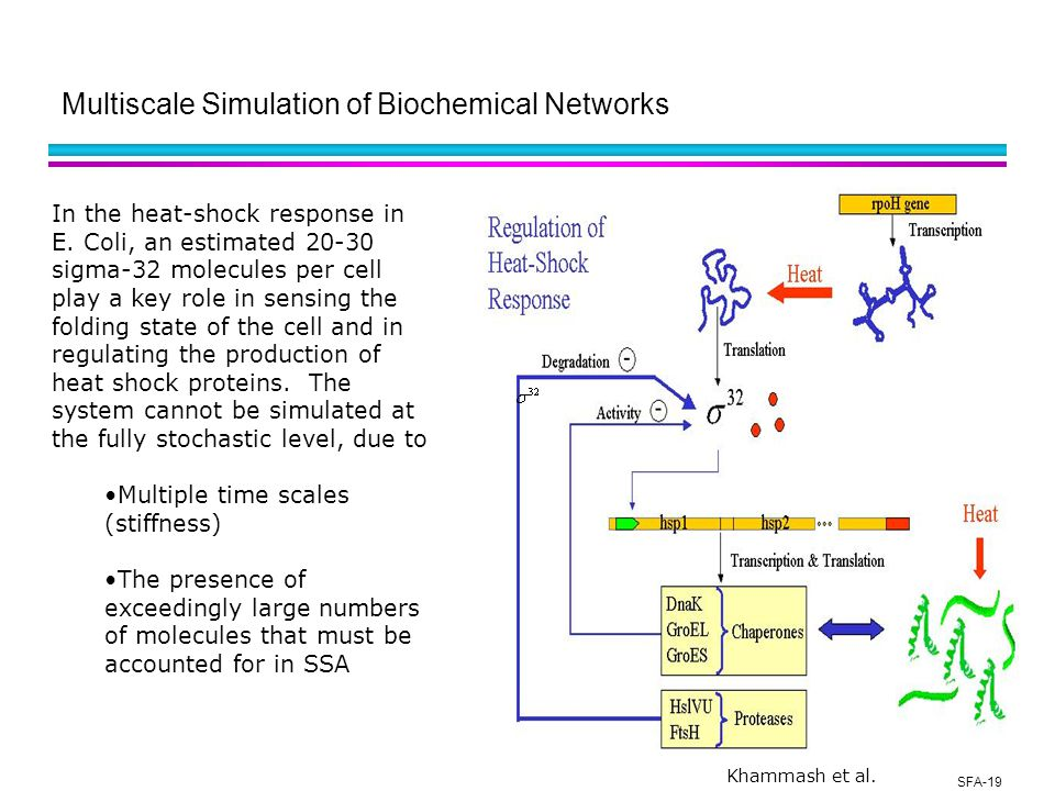 SFA-19 Multiscale Simulation of Biochemical Networks In the heat-shock response in E.