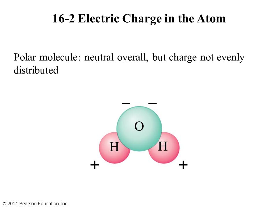 Polar molecule: neutral overall, but charge not evenly distributed 16-2 Electric Charge in the Atom © 2014 Pearson Education, Inc.