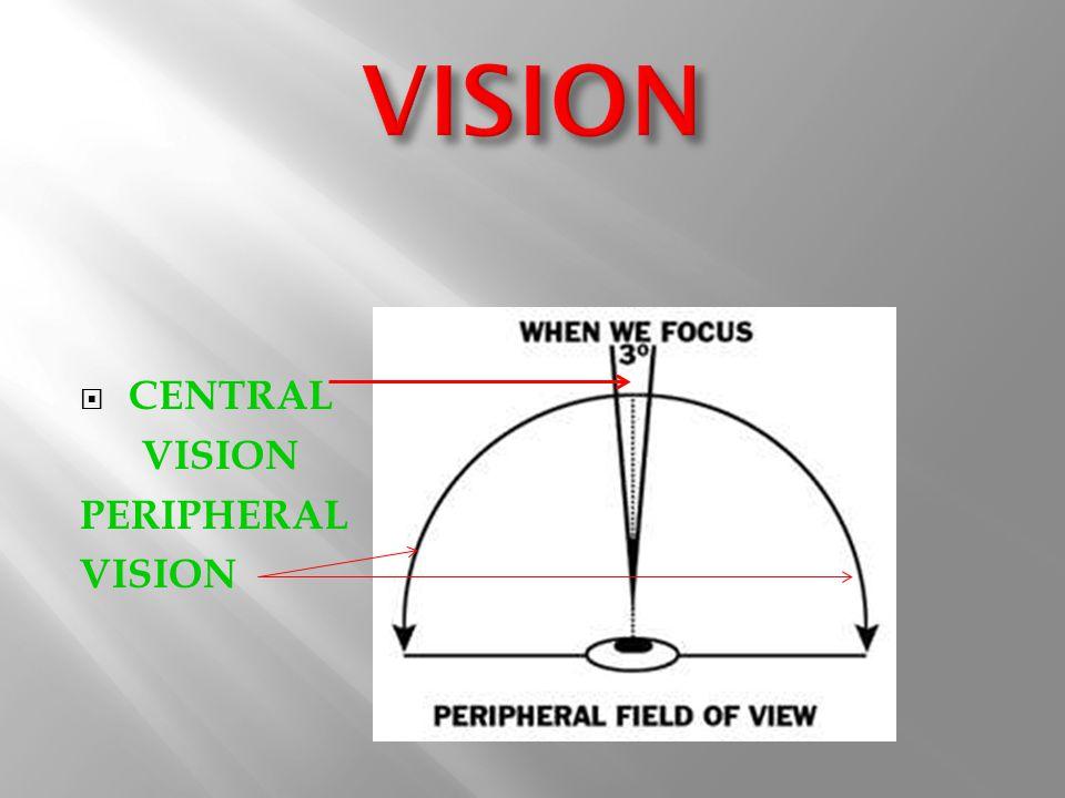  CENTRAL VISION PERIPHERAL VISION