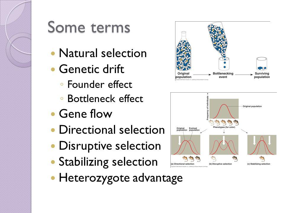 Some terms Natural selection Genetic drift ◦ Founder effect ◦ Bottleneck effect Gene flow Directional selection Disruptive selection Stabilizing selection Heterozygote advantage