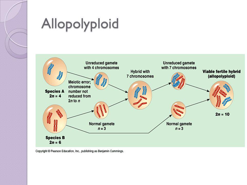 Allopolyploid