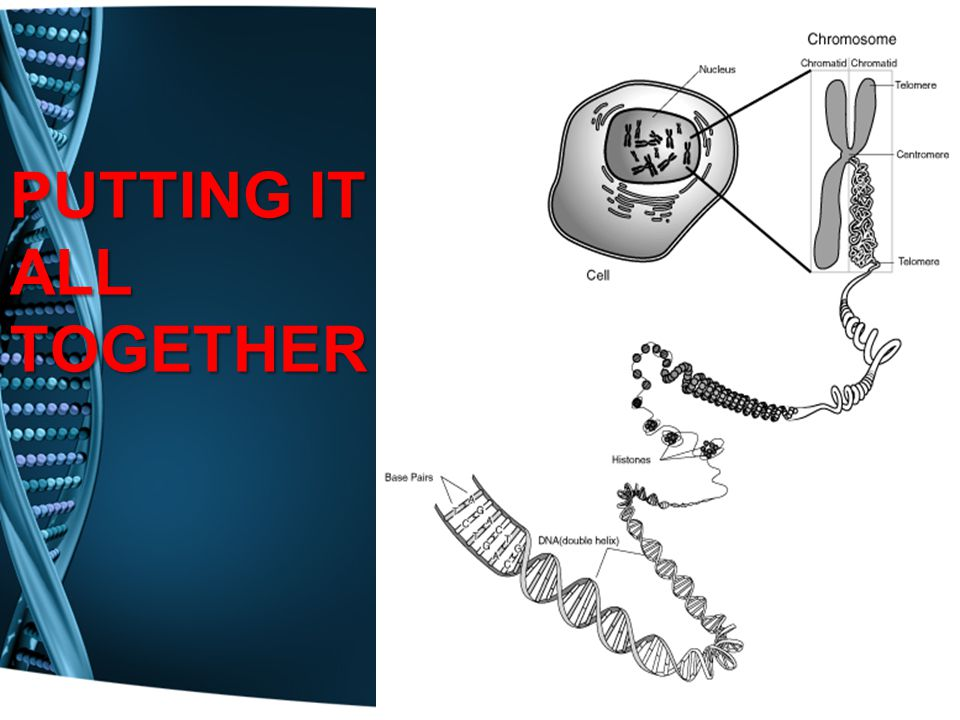 KNOWLEDGE CHECK 1.What does DNA stand for? 2.Where is DNA located? 3.Why is DNA important?