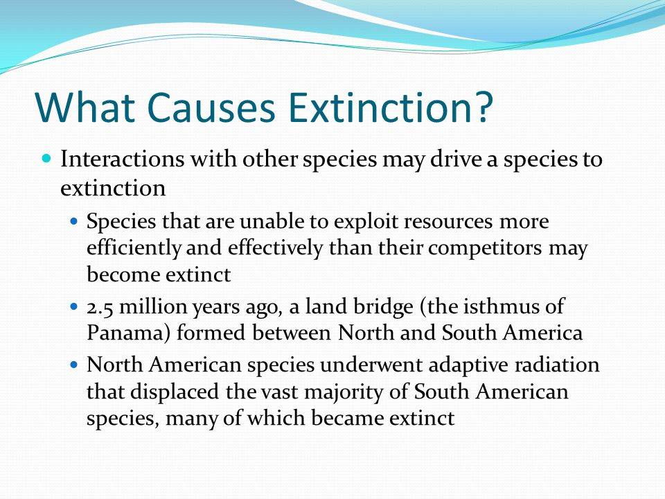 What Causes Extinction? Interactions with other species may drive a species to extinction Species that are unable to exploit resources more efficientl