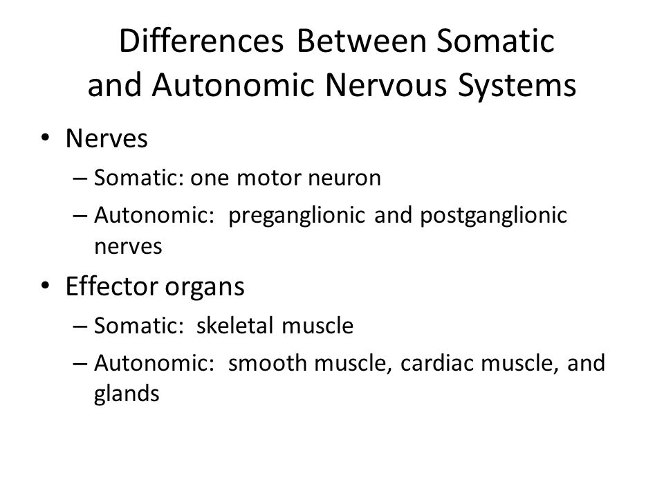 Differences Between Somatic and Autonomic Nervous Systems Nerves – Somatic: one motor neuron – Autonomic: preganglionic and postganglionic nerves Effe