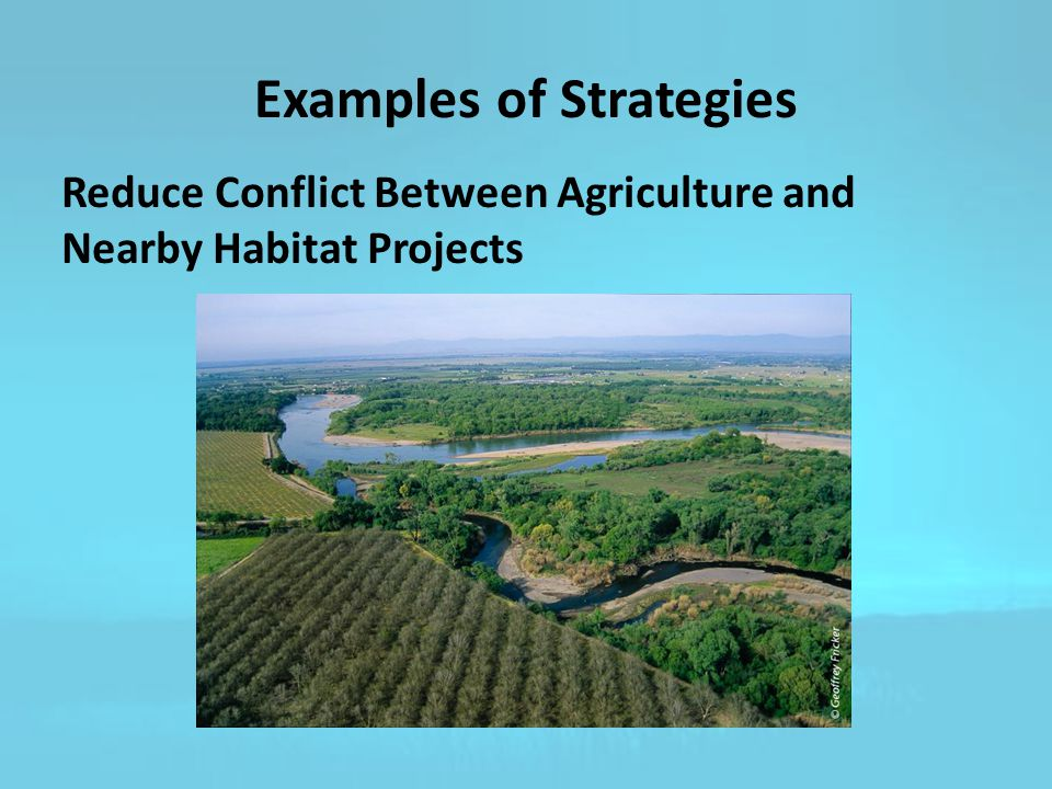 Examples of Strategies Reduce Conflict Between Agriculture and Nearby Habitat Projects