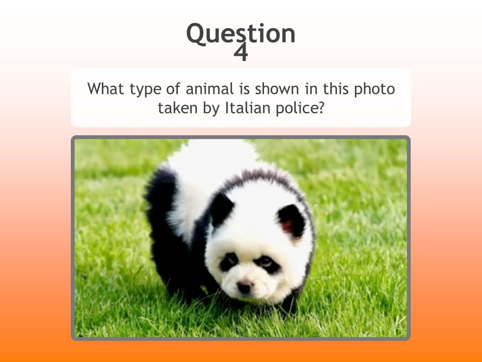 Question 4 What type of animal is shown in this photo taken by Italian police?