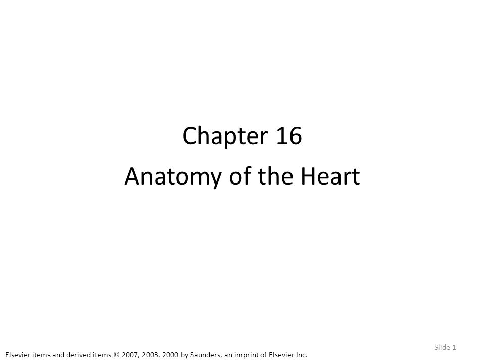 Elsevier items and derived items © 2007, 2003, 2000 by Saunders, an imprint of Elsevier Inc. Slide 1 Chapter 16 Anatomy of the Heart