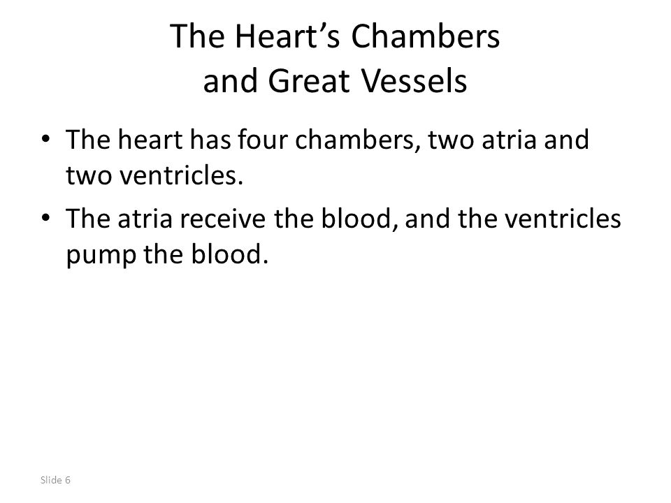 Slide 6 The Heart's Chambers and Great Vessels The heart has four chambers, two atria and two ventricles. The atria receive the blood, and the ventric