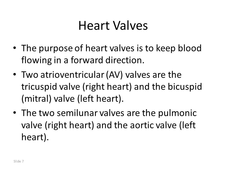 Slide 7 Heart Valves The purpose of heart valves is to keep blood flowing in a forward direction. Two atrioventricular (AV) valves are the tricuspid v
