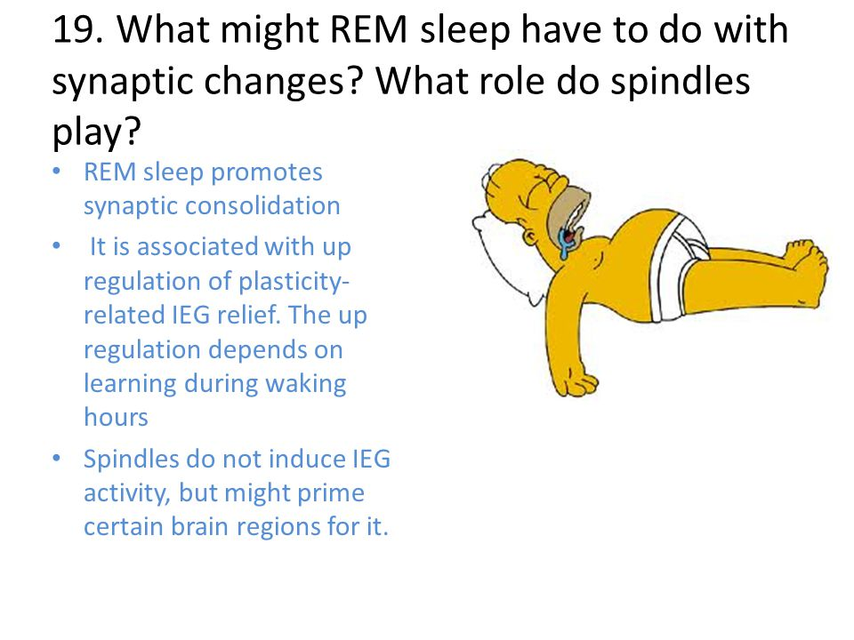 19. What might REM sleep have to do with synaptic changes.