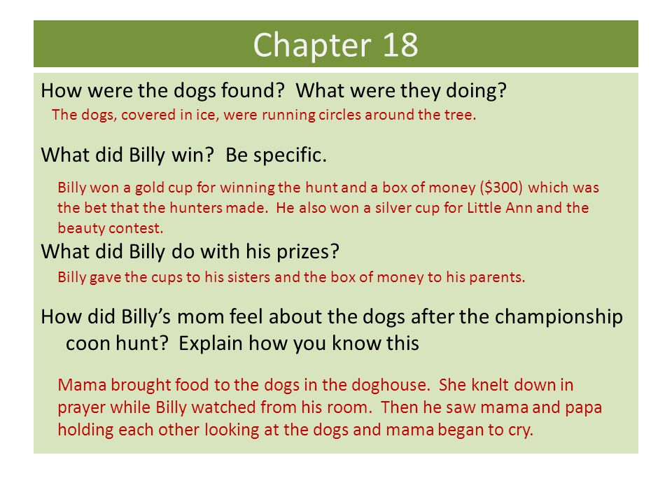 Chapter 18 How were the dogs found? What were they doing? What did Billy win? Be specific. What did Billy do with his prizes? How did Billy's mom feel