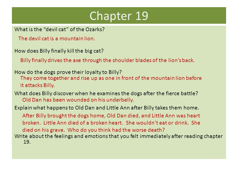 """Chapter 19 What is the """"devil cat"""" of the Ozarks? How does Billy finally kill the big cat? How do the dogs prove their loyalty to Billy? What does Bil"""
