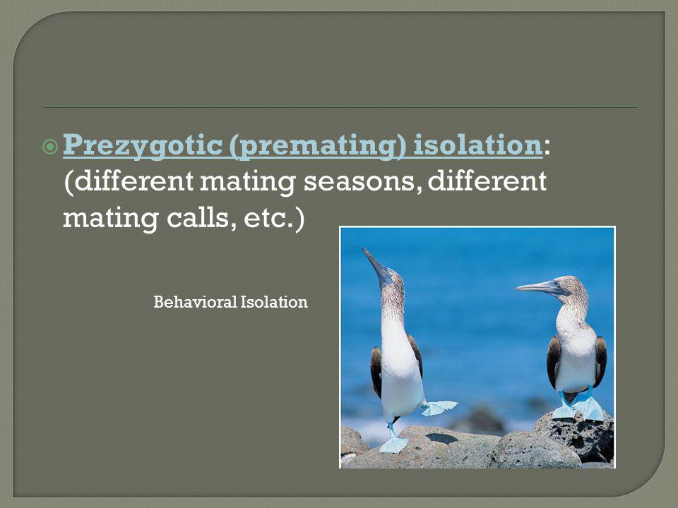  Prezygotic (premating) isolation: (different mating seasons, different mating calls, etc.) Behavioral Isolation