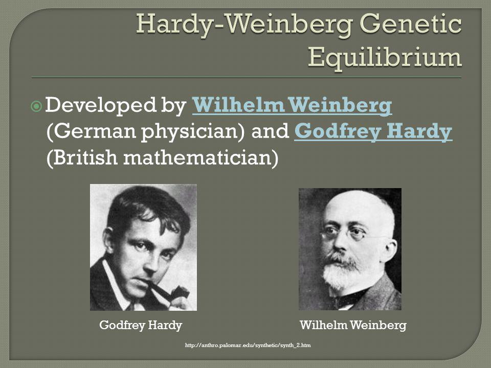  Developed by Wilhelm Weinberg (German physician) and Godfrey Hardy (British mathematician) http://anthro.palomar.edu/synthetic/synth_2.htm Godfrey H