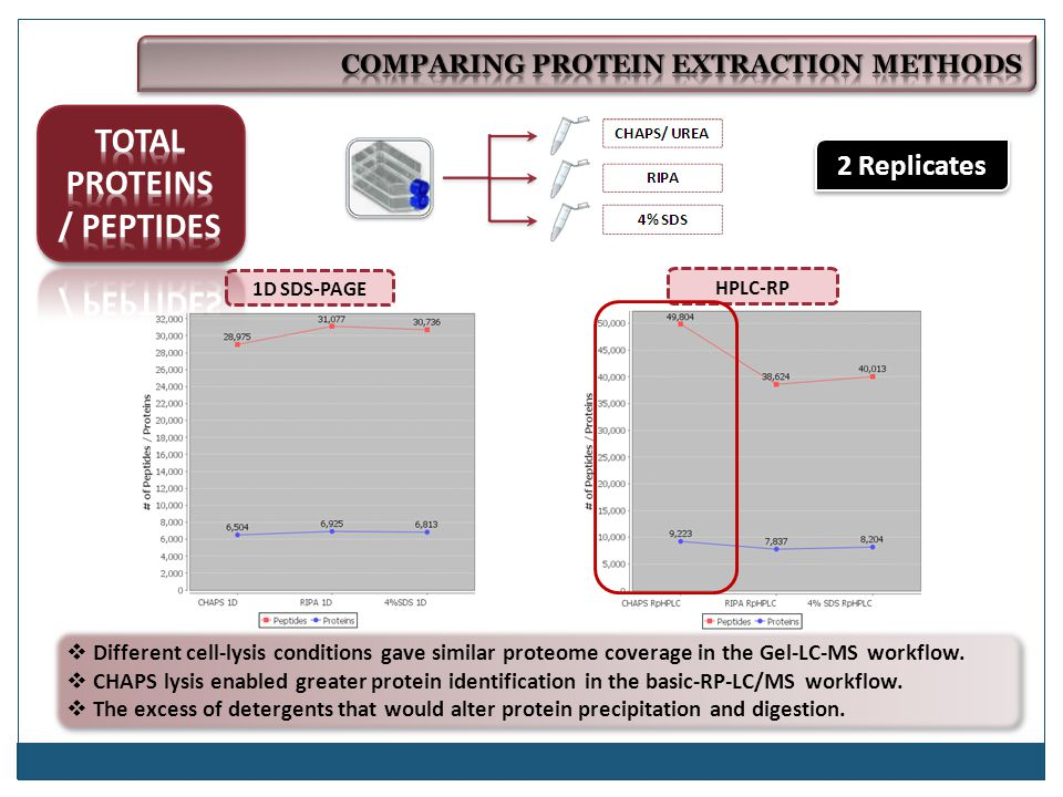 HPLC-RP 1D SDS-PAGE 2 Replicates  Different cell-lysis conditions gave similar proteome coverage in the Gel-LC-MS workflow.