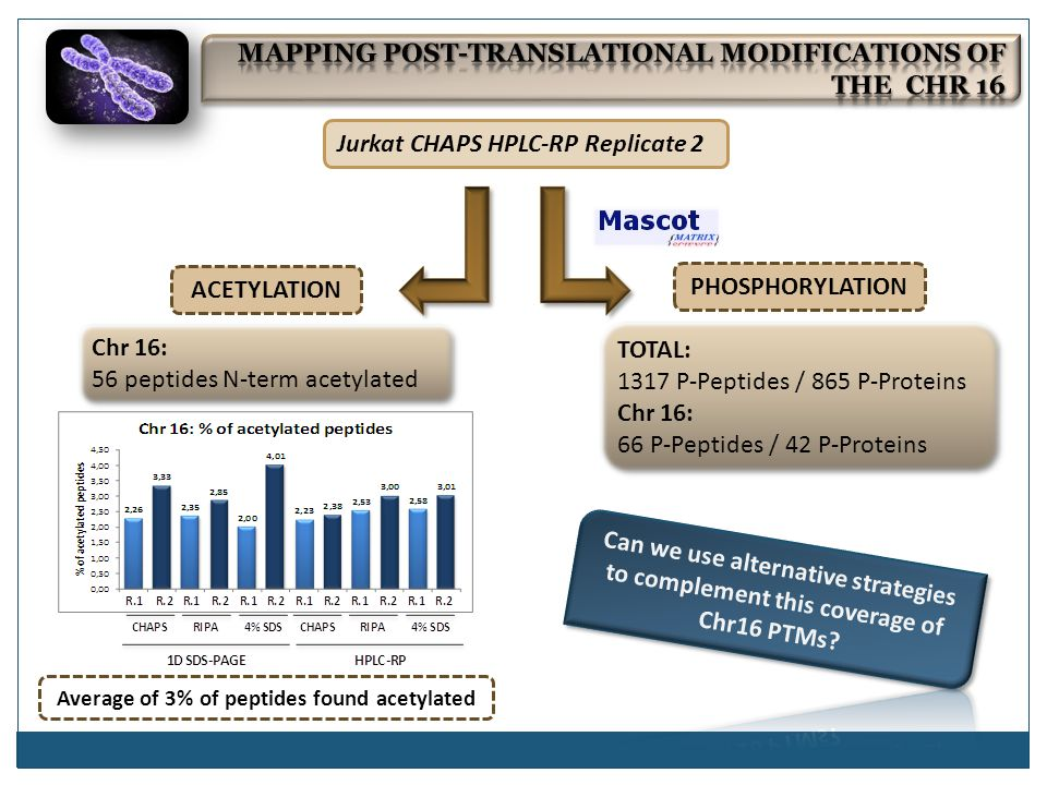 ACETYLATION PHOSPHORYLATION TOTAL: 1317 P-Peptides / 865 P-Proteins Chr 16: 66 P-Peptides / 42 P-Proteins TOTAL: 1317 P-Peptides / 865 P-Proteins Chr 16: 66 P-Peptides / 42 P-Proteins Jurkat CHAPS HPLC-RP Replicate 2 Average of 3% of peptides found acetylated Chr 16: 56 peptides N-term acetylated Chr 16: 56 peptides N-term acetylated