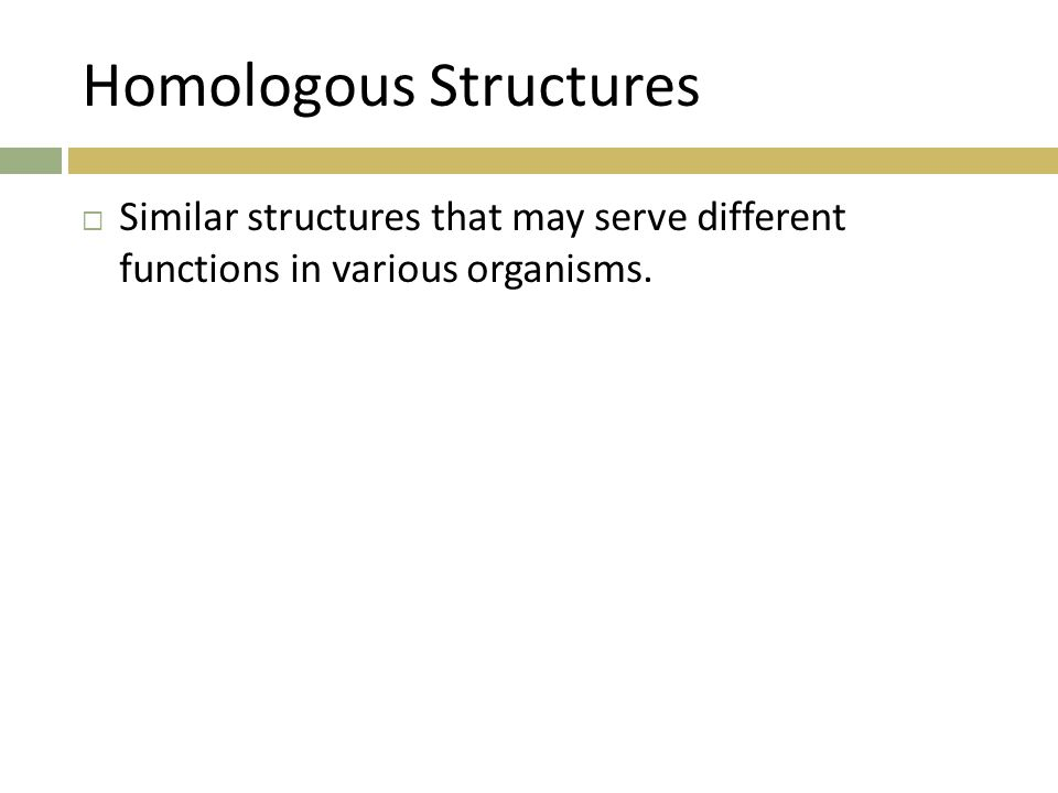 Homologous Structures  Similar structures that may serve different functions in various organisms.