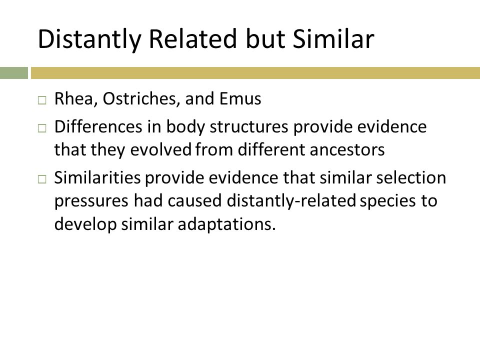Distantly Related but Similar  Rhea, Ostriches, and Emus  Differences in body structures provide evidence that they evolved from different ancestors