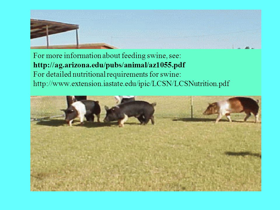 For more information about feeding swine, see: http://ag.arizona.edu/pubs/animal/az1055.pdf For detailed nutritional requirements for swine: http://ww