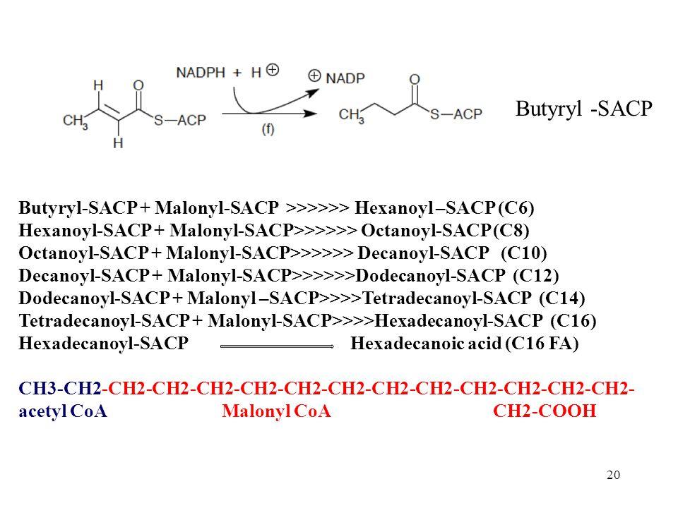 20 Butyryl -SACP Butyryl-SACP + Malonyl-SACP >>>>>> Hexanoyl –SACP (C6) Hexanoyl-SACP + Malonyl-SACP>>>>>> Octanoyl-SACP (C8) Octanoyl-SACP + Malonyl-SACP>>>>>> Decanoyl-SACP (C10) Decanoyl-SACP + Malonyl-SACP>>>>>>Dodecanoyl-SACP (C12) Dodecanoyl-SACP + Malonyl –SACP>>>>Tetradecanoyl-SACP (C14) Tetradecanoyl-SACP + Malonyl-SACP>>>>Hexadecanoyl-SACP (C16) Hexadecanoyl-SACP Hexadecanoic acid (C16 FA) CH3-CH2-CH2-CH2-CH2-CH2-CH2-CH2-CH2-CH2-CH2-CH2-CH2-CH2- acetyl CoAMalonyl CoACH2-COOH